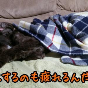 アタマ悪いってほんと疲れる。