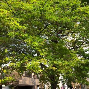 近所散歩で新緑にうっとり、気分スッキリしてお知らせ解禁!会員限定ショップで動画配信開始します〜!