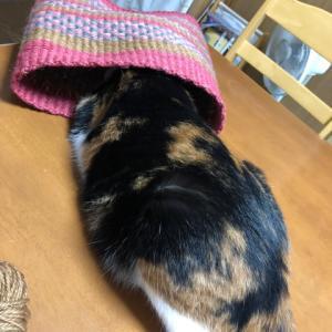猫の目天気はアトリエで作業に集中!大物仕上げて、布選びは自己肯定感大事にね!