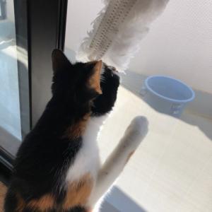 お日様の勢いに負けて、カーテン丸洗いからの〜窓掃除は汗まみれだ〜!