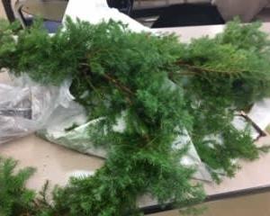 フラワーアレンジメント『冬のリース作り』&『クリスマス飾り』