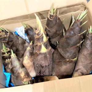 【掘りたての竹の子がいっぱい・・・ ★ <竹の子のフルコース> 『若竹煮』『焼き竹の子』『竹の子のきんぴら』 『竹の子ごはん』『竹の子の味噌汁』】