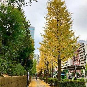 【 ≪品川駅 高輪口≫のバス停の銀杏 ★ 今年も枇杷のお花が咲きました  ★ 夕食は『ハヤシライス』】