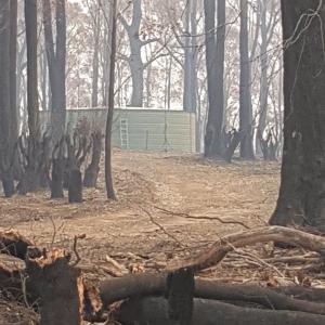森林火災でラディアータの森が焼失