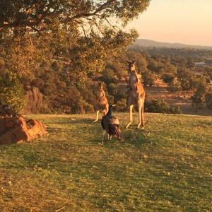 Eucalyptus marginataとしばらく向き合ってみます