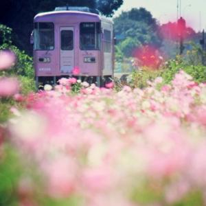 on the field…Yamaguma,Tachiarai-town