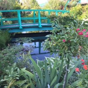 睡蓮の庭で