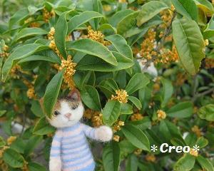羊毛猫と秋の花