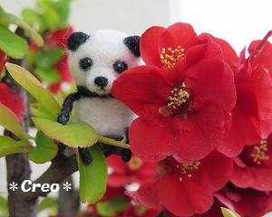 羊毛パンダくんのお花見♪