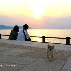 羊毛ワンコと海辺の夕日