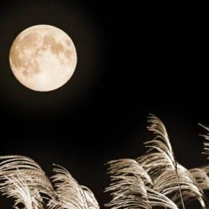 【2m14d】秋中の名月