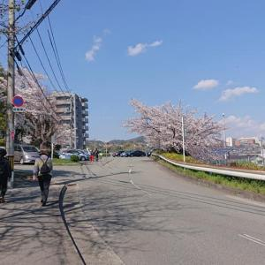 2020年桜見お散歩♪