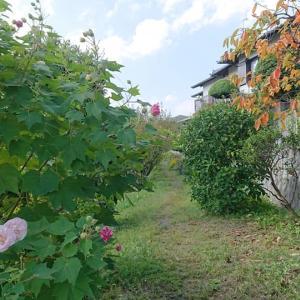 秋のお花見散歩U*^ ^*)