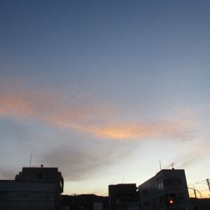 早朝の散歩  5月8日