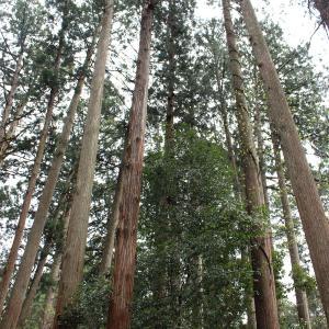 勝山 平泉寺(白山神社)、雨のち晴れ