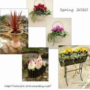 初夏の花準備 そしてプラ鉢の事