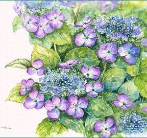 紫陽花(水彩)