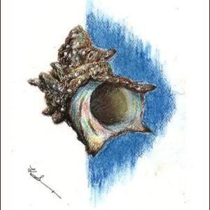 サザエ(オイルパステル) 、そして 静かな海