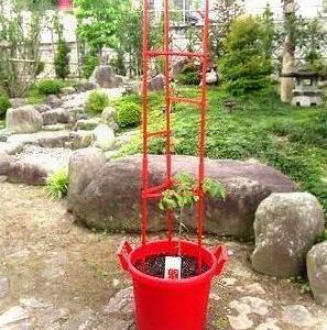 オシャレなプランター de 初めてのトマト栽培