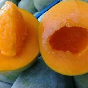 マンゴーの季節到来!