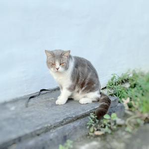 ぶさかわいい猫