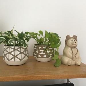 ポトスの植え替え。鉢を変えてみました。