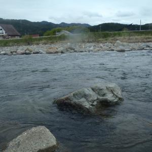 4月29日長良川本流アマゴ釣り