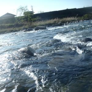 5月2日長良川本流アマゴ釣り