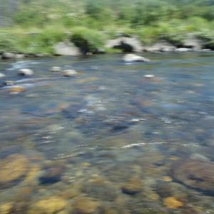 8月13日 長良川アユ釣り