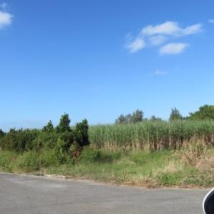 沖縄に行ってきました(ひらまつ宜野座 到着)partⅡ