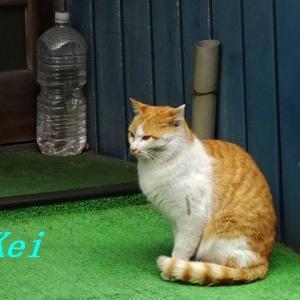 伊豆の猫ちゃんズ(・ω・)猫の日だにゃ!(・ω・)アニメ「ケムリクサ」めっさ気になる