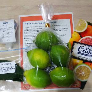 たびくる「アボカドとレモンのリモート収穫体験」