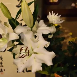 真冬に夏の花