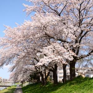 春爛漫 12