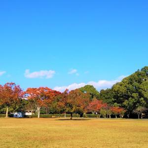 【秋晴れと秋色に染まり始めた公園】大阪・京都・奈良の出張ペーパードライバー講習