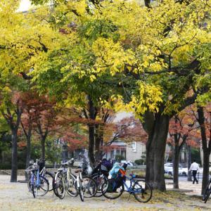 中央公園の秋 2019