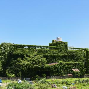 毎年気になる緑の廃墟 2020