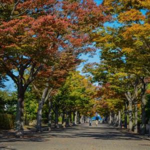 紅葉散歩 香川県運動公園