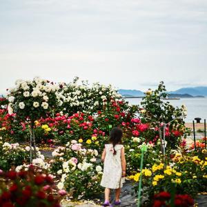 高松港のバラ 2021/05