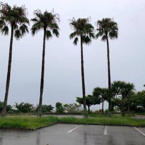 今日も大雨・・・