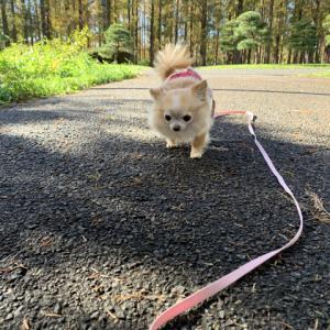 2019.12.3 水元お散歩トレーニング。