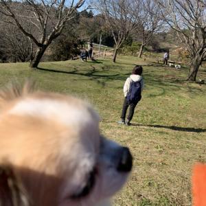 2019.12.8 つくばお散歩トレーニング。