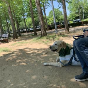 たまには公園へ。