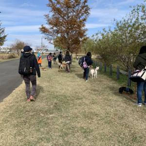 横浜お散歩トレーニングとリードワーク、2020.11.29