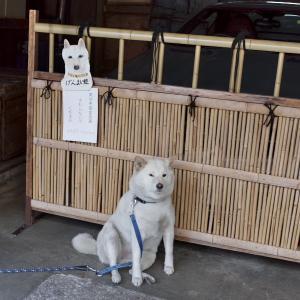 「店番犬」