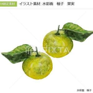 イラスト素材: 水彩画 柚子 果実   PIXTA でダウンロードされました。