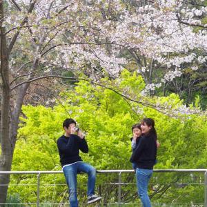 満開の桜の下で、再会の撮影会
