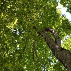 秘境のブナの森