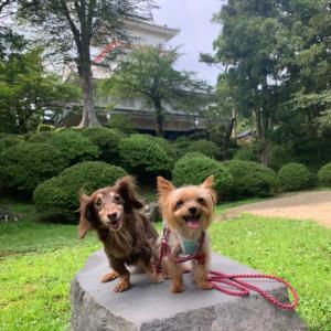 千秋公園お散歩