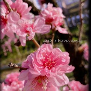今頃「ポートレートモード」とやらに気づき花の写真を撮ってみた!&噂のミルキーのままの味♪♪